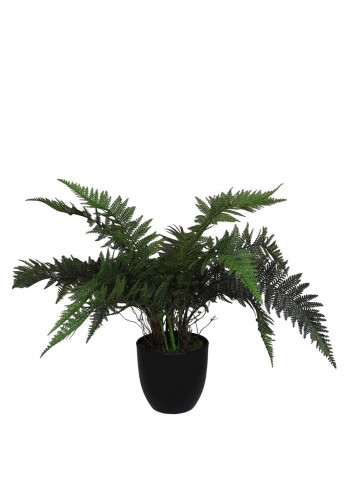 WJ Sampson Potted Boston Fern